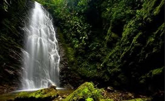 tours to mindo cloud forest